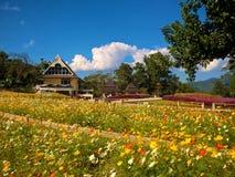 Kwiatu ogród przed Chiang Mai baldachimu spacerem Obraz Stock