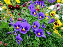 Kwiatu ogród przy miasto parkiem Fotografia Royalty Free