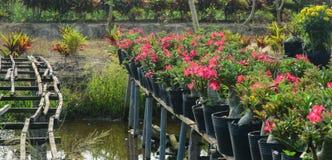 Kwiatu ogród przy Sadek miasteczkiem w Dong Thap, Wietnam Fotografia Stock