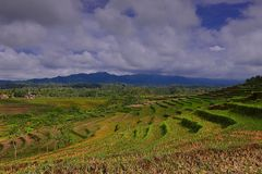 Kwiatu ogród Silancur Cudowny Magelang Indonezja obrazy stock