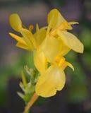 Kwiatu ogród w Amherstburg, Ontario, Kanada Zdjęcie Stock