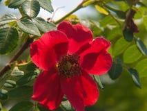 Kwiatu ogród w Rhone alpes w France obrazy stock