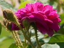 Kwiatu ogród w Rhone alpes w France obraz stock
