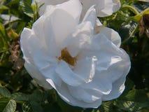 Kwiatu ogród w Rhone alpes w France zdjęcie royalty free
