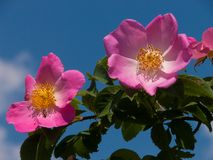 Kwiatu ogród w Rhone alpes w France zdjęcia royalty free