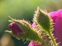 Kwiatu ogród w Rhone alpes w France obraz royalty free