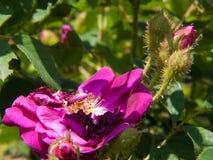 Kwiatu ogród w Rhone alpes w France zdjęcia stock
