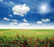 kwiatu ogródu czerwień Fotografia Stock