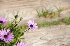 kwiatu ogródu czerwień s Fotografia Stock