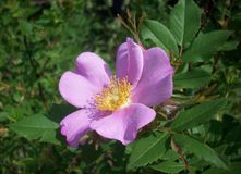 kwiatu ogródu purpury Obrazy Royalty Free