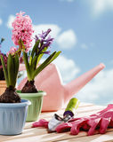 kwiatu ogrodnictwa narzędzia Obraz Royalty Free