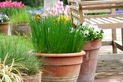 kwiatu ogrodnictwa zielarski garnka taras Obrazy Stock