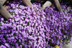 Kwiatu ogrodzenie Obrazy Royalty Free