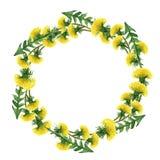 Kwiatu okrąg Set akwareli dandelions Ilustracja na biel zdjęcia royalty free