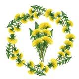 Kwiatu okrąg Set akwareli dandelions Ilustracja na biel zdjęcie royalty free
