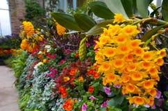 Kwiatu okwitnięcie Obraz Royalty Free