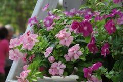 Kwiatu okwitnięcie Zdjęcia Stock