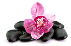 kwiatu orchidei kamień Fotografia Royalty Free