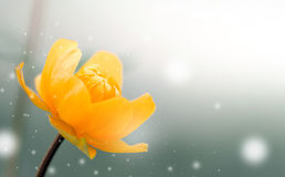 Kwiatu pączka tło Zdjęcie Royalty Free