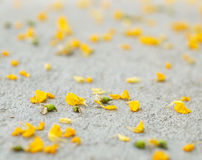 kwiatu płatków kolor żółty Obrazy Royalty Free