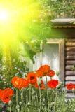 kwiatu płatków maczki czerwoni Zdjęcia Royalty Free