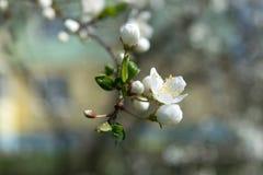 Kwiatu pączek obrazy royalty free