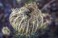 Kwiatu pączek zdjęcie stock