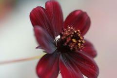 kwiatu pająk zdjęcie stock
