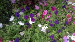 Kwiatu park Zdjęcie Royalty Free