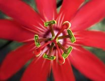 kwiatu pasi czerwień zdjęcia stock