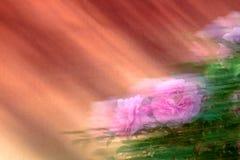 kwiatu peoni menchie Zdjęcia Royalty Free