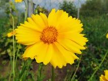 kwiatu piękny kolor żółty zdjęcia stock