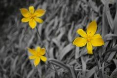 kwiatu piękny kolor żółty obrazy stock