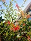 Kwiatu piękno Zdjęcie Royalty Free