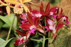 kwiatu piękny ogród Obrazy Stock