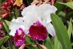 kwiatu piękny ogród Zdjęcia Stock