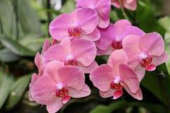 kwiatu piękny ogród Zdjęcie Royalty Free