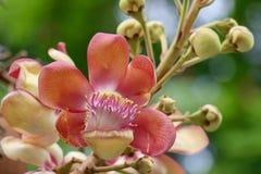 kwiatu piękny ogród Obraz Royalty Free