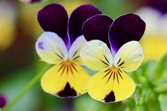 kwiatu piękny ogród Fotografia Stock