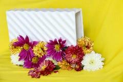 kwiatu piękny ogród Fotografia Royalty Free