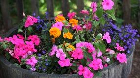 kwiatu plantator Obrazy Royalty Free