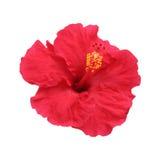 kwiatu poślubnik Zdjęcia Stock