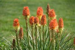 Kwiatu pola tło fotografia royalty free