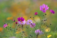 Kwiatu pole fotografia stock