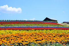 Kwiatu pole zdjęcia stock