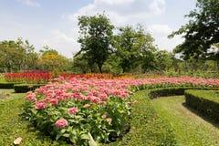 Kwiatu pole Obraz Stock