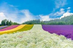 Kwiatu pole z łyszczec w centrum z pięknym niebem w Hok Zdjęcie Stock
