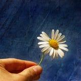 kwiatu prezent Obraz Royalty Free