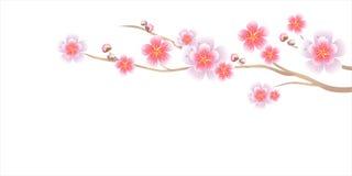 Kwiatu projekt Gałąź Sakura odizolowywał na białym tle Jabłoniowi kwiaty Czereśniowy okwitnięcie Wektoru EPS 10 cmyk ilustracji