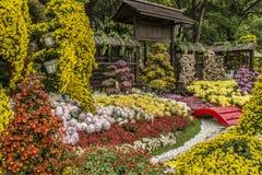 Kwiatu przedstawienie fotografia royalty free